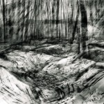 Trenches in Aveluy Wood. Somme. 2pm. 3 Feb 2001. A3 Charcoal-ink